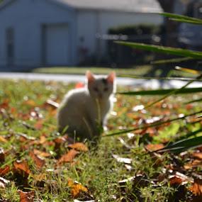 by Ian  Rivera - Animals - Cats Kittens