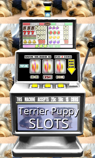 3D Terrier Puppy Slots - Free
