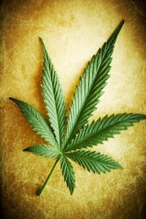Marijuana Live Wallpaper - screenshot thumbnail