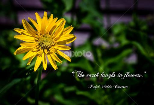 Yellow flower quotes sentences typography pixoto yellow flower by jim hustad typography quotes sentences mightylinksfo