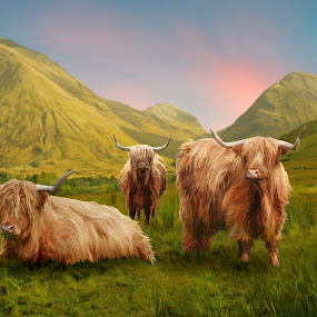 Highland Cows by Charlie Alolkoy - Illustration Animals ( highland, scotland, mountain, grass, sunset, cow, animal )