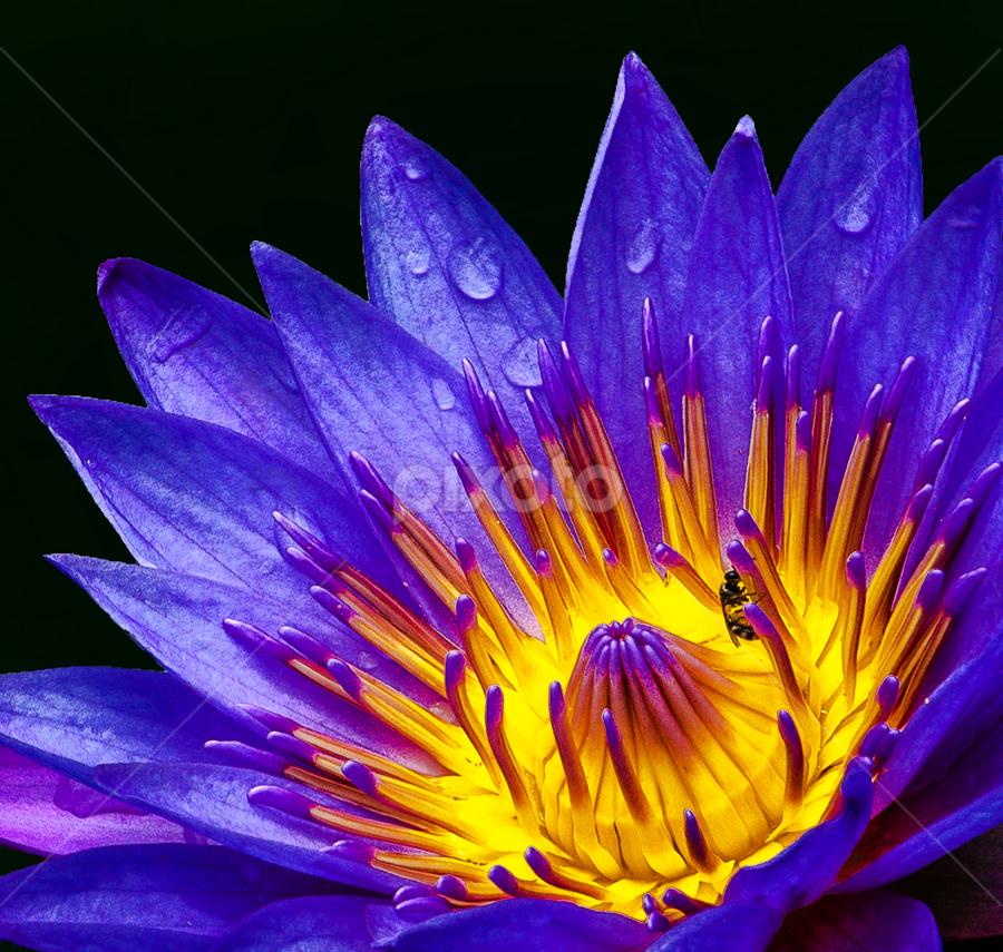 by Albert Lee - Flowers Single Flower