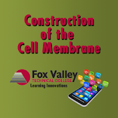Construct a Cell Membrane