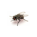 The Fly icon