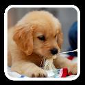 PuppyWall -LiveWallpaper logo