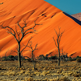 Dead trees against a Dune by Johan Jooste Snr - Nature Up Close Trees & Bushes ( sand, desert, dune, trees, namibia )