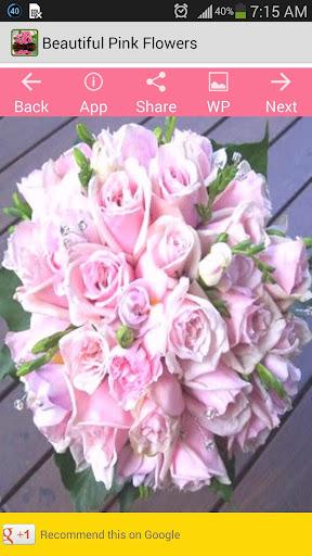 美麗的粉紅色的花朵