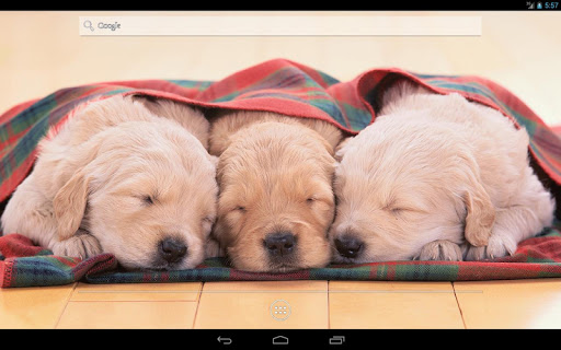 玩免費個人化APP|下載Fluffy puppies Live Wallpaper app不用錢|硬是要APP