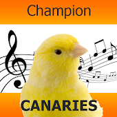 Singer Canary