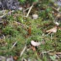 Catherine's Moss