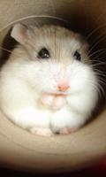 Screenshot of Crazy Hamster Pet