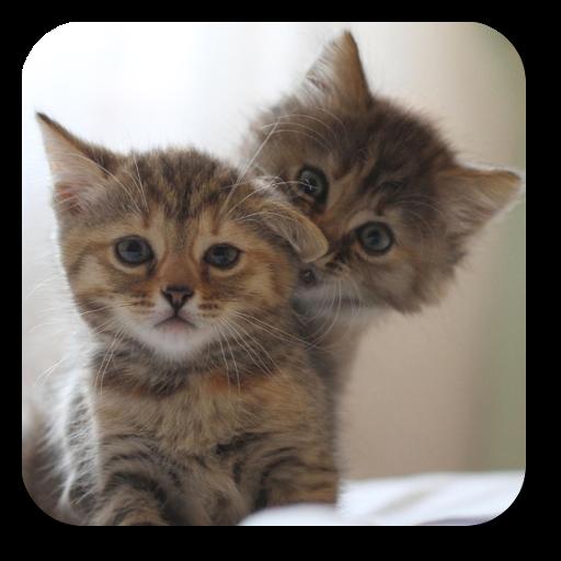 个人化の猫壁紙 LOGO-記事Game