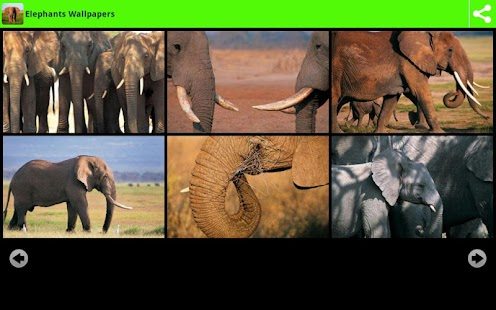 Elephants Wallpapers- screenshot thumbnail