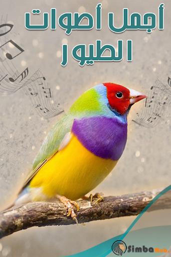 أجمل أصوات الطيور