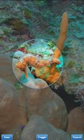 Screenshot of Photo Gallery (Fish Bowl)
