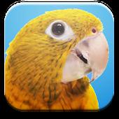 Spoken Genre for Parrots
