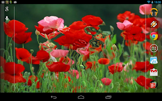 Screenshot of Galaxy Interactive Red Poppies