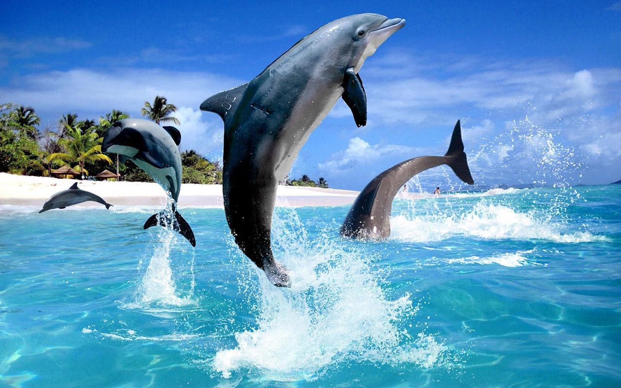 dolphin hd live wallpaper android apps on google play