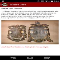 Screenshot of TORTOISE CARE 101