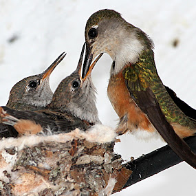 Lunch time by Charmaine Albury - Animals Birds