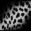 LiveWallpaper Leopard 2 Clock logo