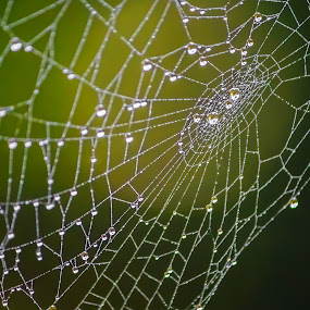 The webs we weave by Steve Kazemir - Nature Up Close Other Natural Objects ( steve's favs )
