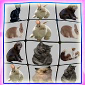 Onet Pet Animals