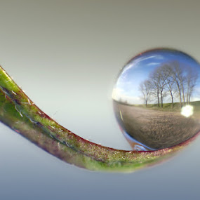 Natural fisheye lens by Alberto Ghizzi Panizza - Abstract Water Drops & Splashes ( water, dew, drop, sphere, leaf,  )