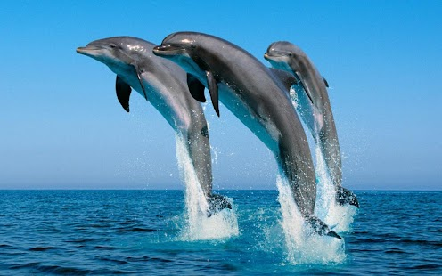 Beautiful Dolphins HD - screenshot thumbnail