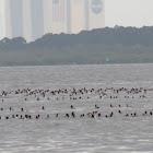 Raft of ducks