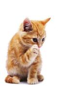 Screenshot of Cute Orange Kitty