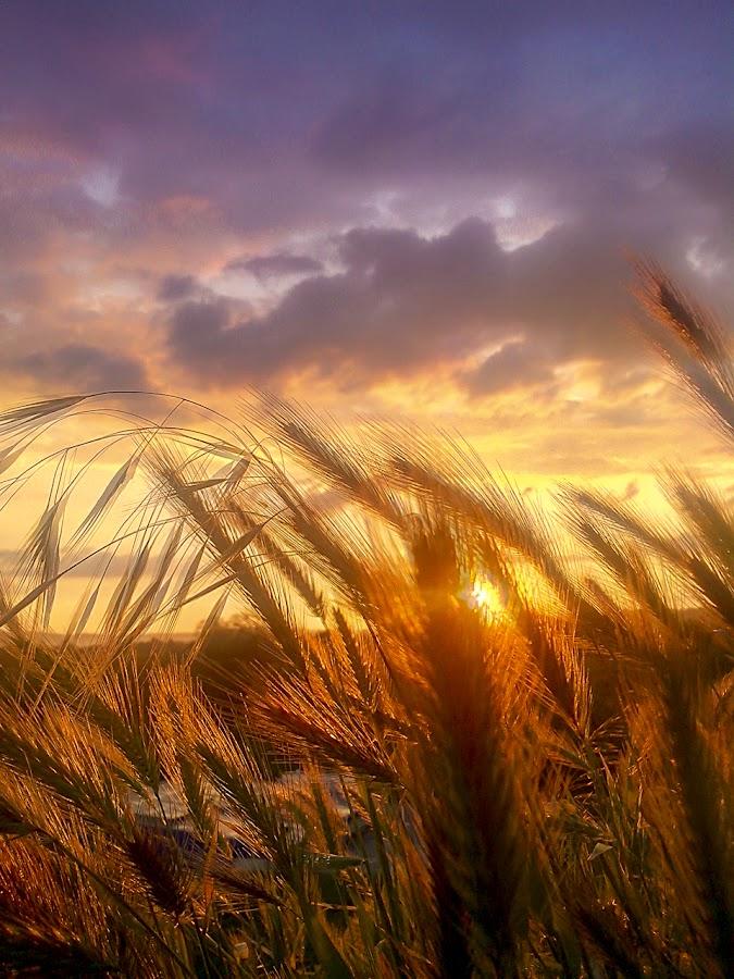 Warm dreams by Cosmin Radut - Landscapes Sunsets & Sunrises ( clouds, field, dreams, sunset, landscape,  )