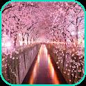 Cherry Blossom Wallpaper icon
