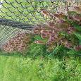 Turf Weeds of Michigan