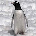 Penguins Live Wallpaper icon