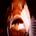 Color Fish LWP No3 Pro