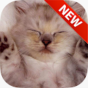 Sleeping Animal Wallpapers icon