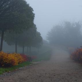 by Morgentau ;) - City,  Street & Park  City Parks ( dramatic landscapes, park, colorful, autumn, fog, trees, road, morning, city park,  )