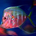 Marine Aquarium Fish icon