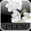 Lovely Sakura Live Wallpaper+ icon