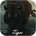 Tiger Video Live Wallpaper icon