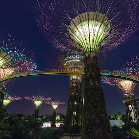 Garden By The Bay by Vincent Tan - City,  Street & Park  City Parks ( park, night, landscape, nightscape, city )