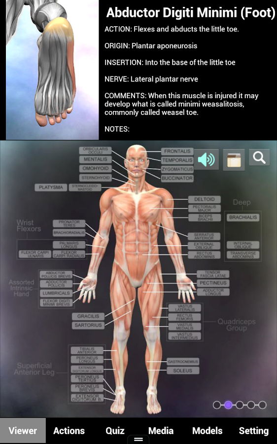 Muscle and Bone Anatomy 3D- screenshot