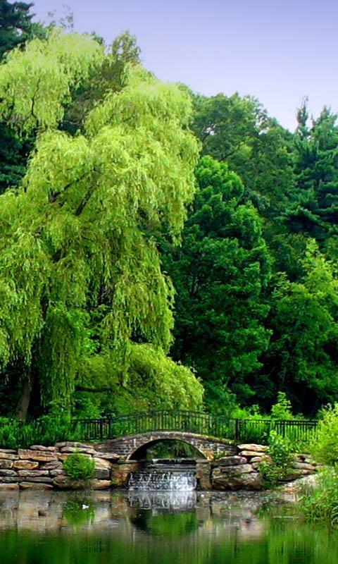 zen taman alam kertas dinding