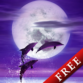 Dolphin -Amethyst-Trial