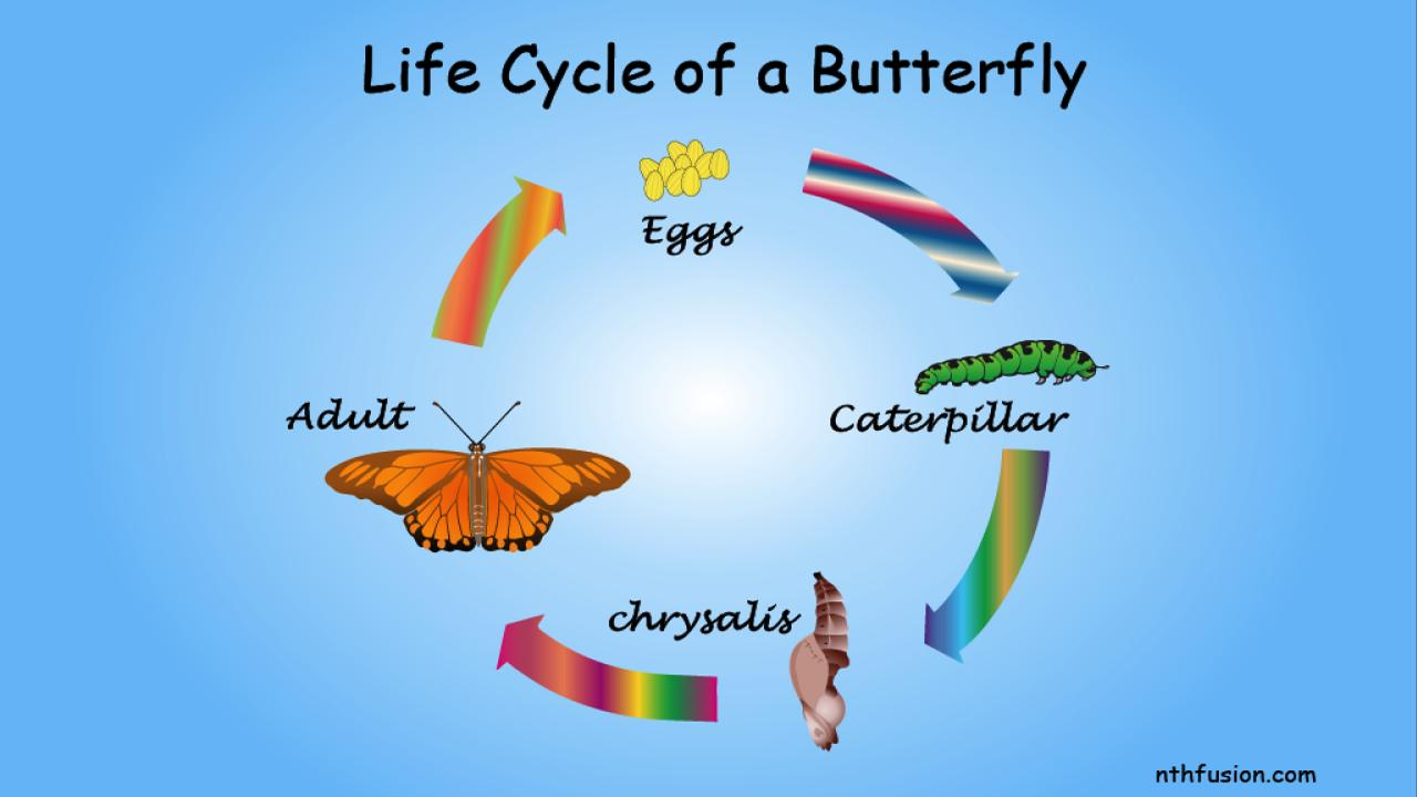 A Life Cycle App- screenshot