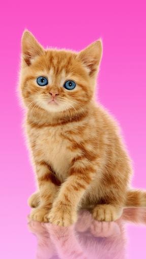 甜貓。裝扮壁紙