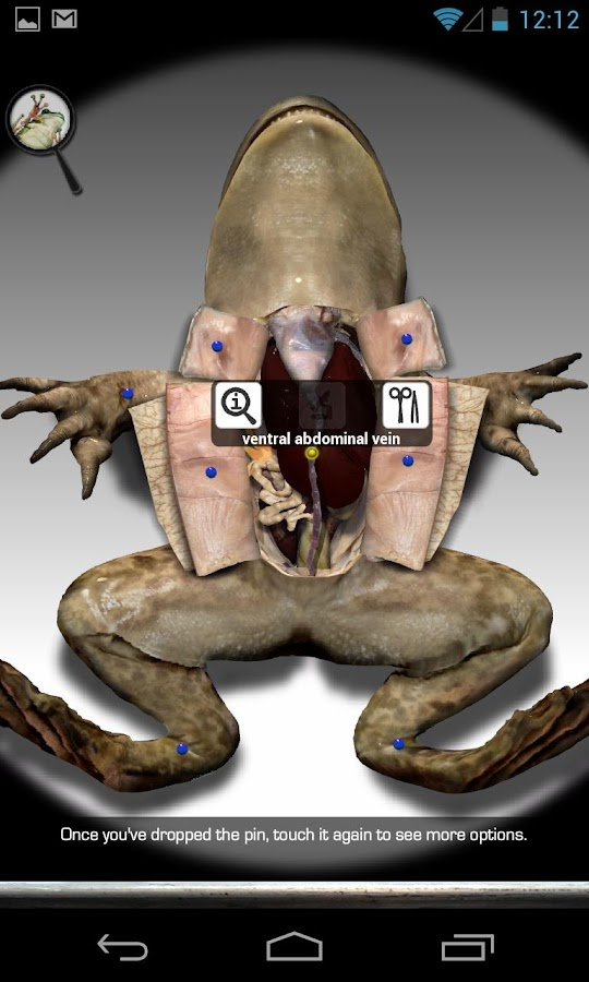 Froguts Frog Dissection - screenshot