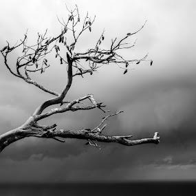 by Alex Kapmar - Black & White Flowers & Plants ( tree, haifa,  )
