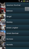 Screenshot of Cats